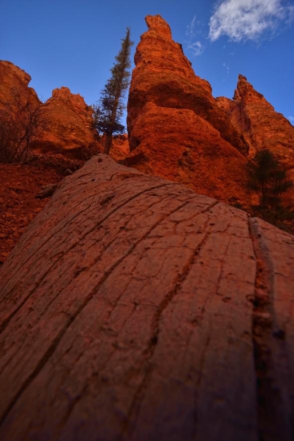 Inside Bryce Canyon