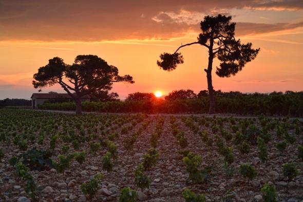 Esparrou Canet-en-Roussillon