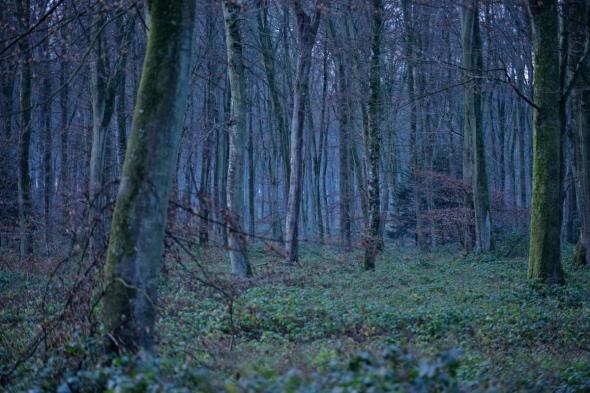 Forêt d'Eu hiver 2014-2015