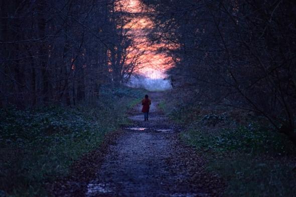 Forêt d'Eu obscurité crépuscule