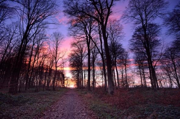 Forêt d'Eu coucher de soleil sur le chemin